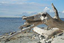 Free Log On The Beach Stock Photo - 8011580