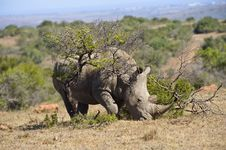 Free Rhino In The Bush Stock Images - 8014434