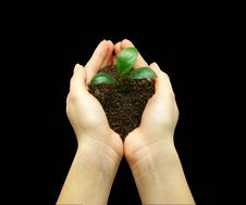 Free Plant In Hands Stock Images - 8016094