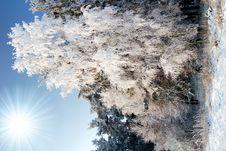 Free Frozen Tree Stock Photo - 8016310