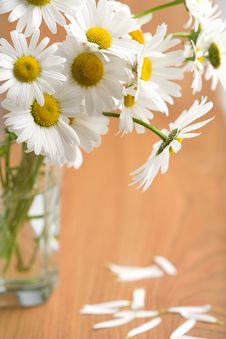 Free Bouquet Of Beautiful Camomiles Stock Images - 8017954