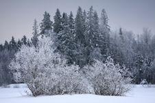 Free Snowy Scenery Royalty Free Stock Photo - 8017965