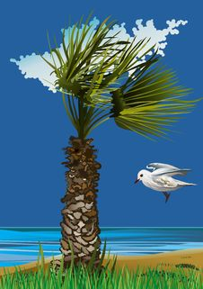 Free Seagull And Palm On The Sea-Vector Illustration Royalty Free Stock Photo - 8018205