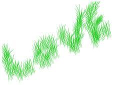 Free Rice Crop Royalty Free Stock Photo - 8018545