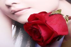 Free Red Roses Stock Photo - 8018800