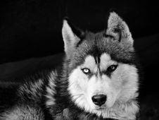 Free Dog Stock Photography - 8019112