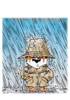 Brown Cat In Rain Coat Royalty Free Stock Images