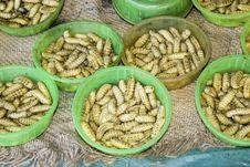 Free Edible Larvae Stock Image - 8019671