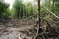 Free Wetland Mangroves Stock Photo - 8020110