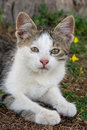 Free Little Kitty Royalty Free Stock Photo - 8029775