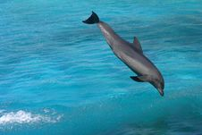 Free Dolphin Bottlenose Stock Photos - 8020023