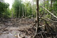 Free Wetland Mangroves Stock Photo - 8020110