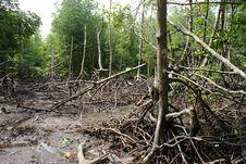 Wetland Mangroves Stock Photo