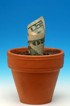 Free Money Grows Royalty Free Stock Image - 8020726