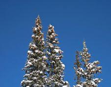 Free Snow On Tree Tops, Winter Stock Photos - 8022343