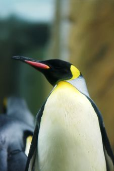 Free A Penguin Stock Images - 8022834