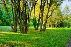 Free Morning In Forest Stock Photos - 8023333