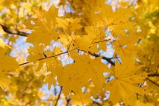 Free Gold Autumn Stock Photography - 8023362