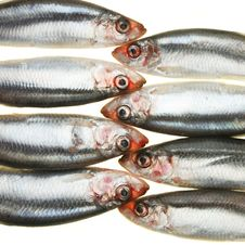 Group Of Sprats Head To Head Stock Photography