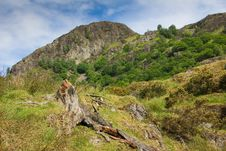 Free Yewdale Crag Royalty Free Stock Photography - 8024117