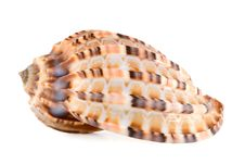 Free Sea Shell Stock Photos - 8024163