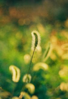 Dog S Tail Grass Royalty Free Stock Photography