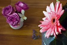 Free Aster And Roses Royalty Free Stock Photo - 8027965