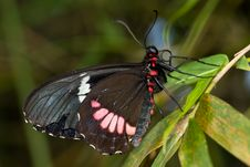 Free Closeup Butterfly Royalty Free Stock Photography - 8028997