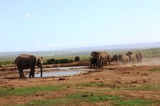 Free Elephants At Waterhole Stock Photos - 8029243