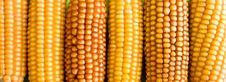 Free Corn Stock Photos - 8029753