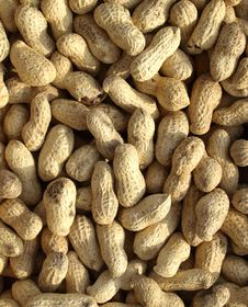 Dry Roasted Peanuts Royalty Free Stock Photo