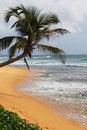Free Palm Tree On An Ocean Coast Royalty Free Stock Photo - 8032445