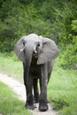 Free Young Elephant Stock Photo - 8039730