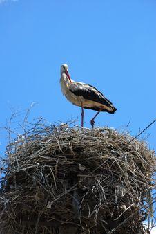 Free Stork In Nest Stock Photos - 8030643