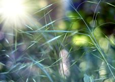 Free Green Grass Meadow Royalty Free Stock Images - 8030889