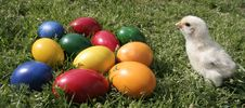 Free Easter Eggs And Chicken Royalty Free Stock Images - 8031039