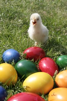 Free Easter Eggs And Chicken Royalty Free Stock Photos - 8031078