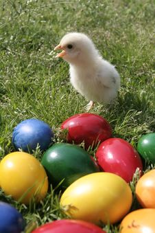 Free Easter Eggs And Chicken Royalty Free Stock Photo - 8031145