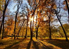 Free Autumn In The Park Royalty Free Stock Photography - 8031277