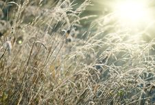 Free Frozen Grass Sunset Royalty Free Stock Images - 8032039