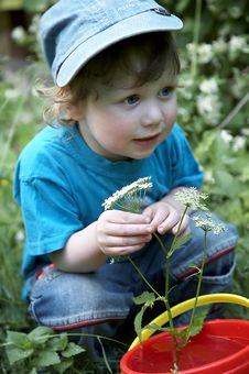 A Boy In The Garden Royalty Free Stock Photos