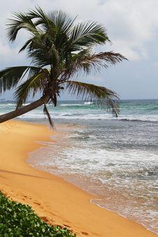 Palm Tree On An Ocean Coast Royalty Free Stock Photo