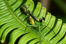 Free Colorful Grasshopper Macro Stock Photography - 8032462