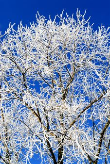 Free Winter Tree Stock Photos - 8033163