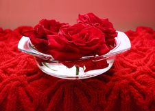 Free Scarlet Roses Stock Photo - 8034200