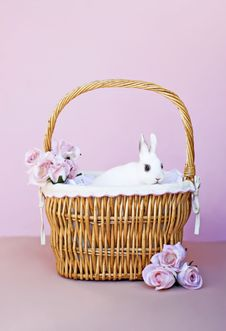 Free White Bunny In A Basket Royalty Free Stock Photography - 8034297