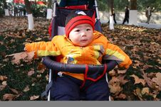 Free Baby In Autumn Leaves Stock Photography - 8034502