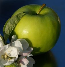 Free Green Apple. Stock Image - 8035561