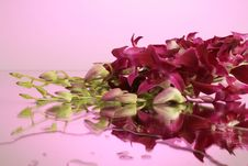 Free Violet Orchids Royalty Free Stock Photography - 8035587