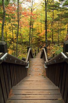 Free Stairs Leading Into Autumn Forest Stock Image - 8037131